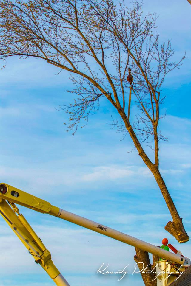 Maple Springs Tree Service Crane