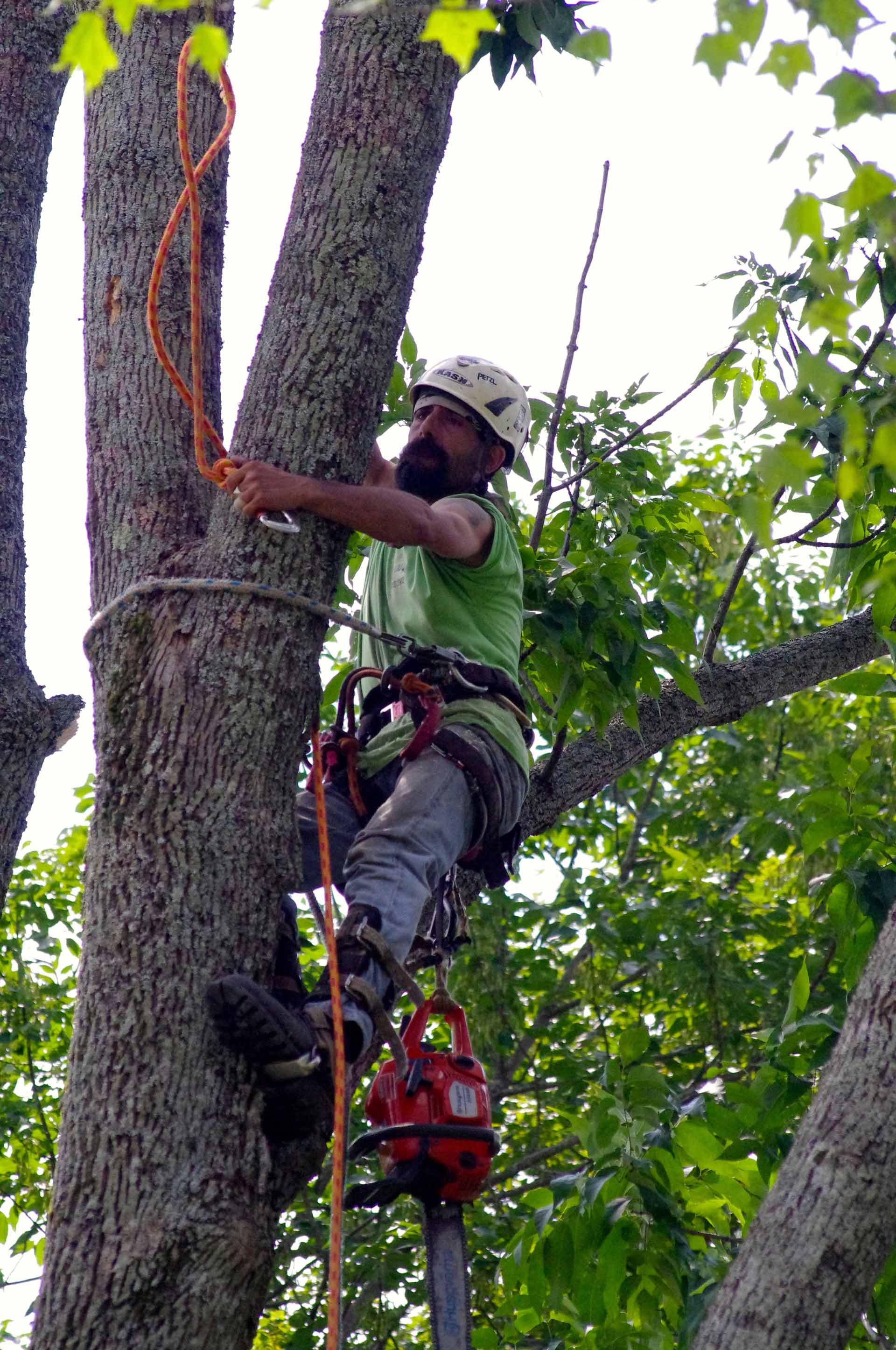 Maple Springs Tree Service Employee