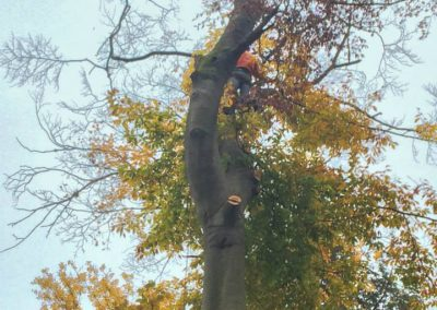 gallery_fall_tree_removal