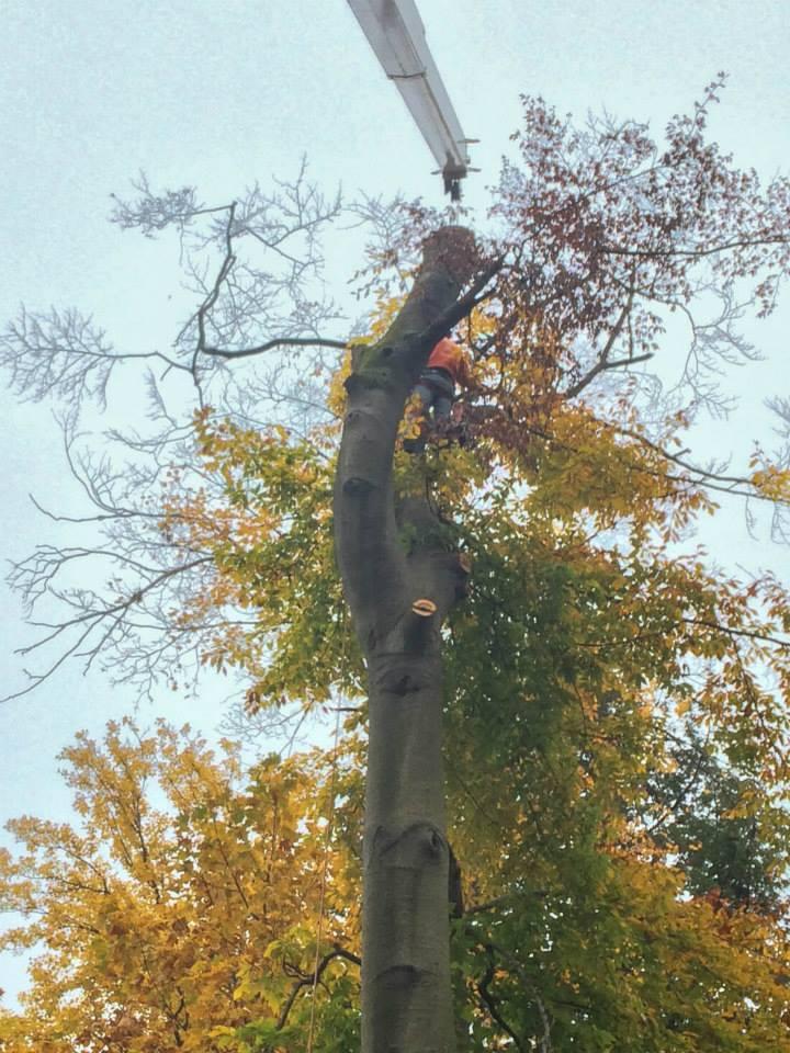 Crane Topping Tree