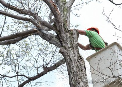 gallery_tree_removal_ower