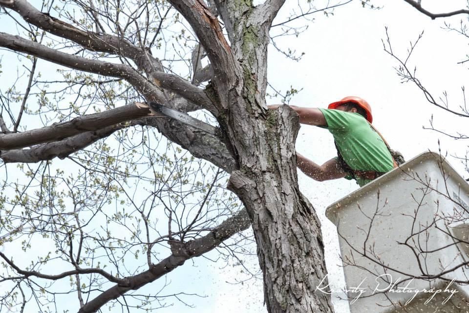 Dewittville Tree Expert