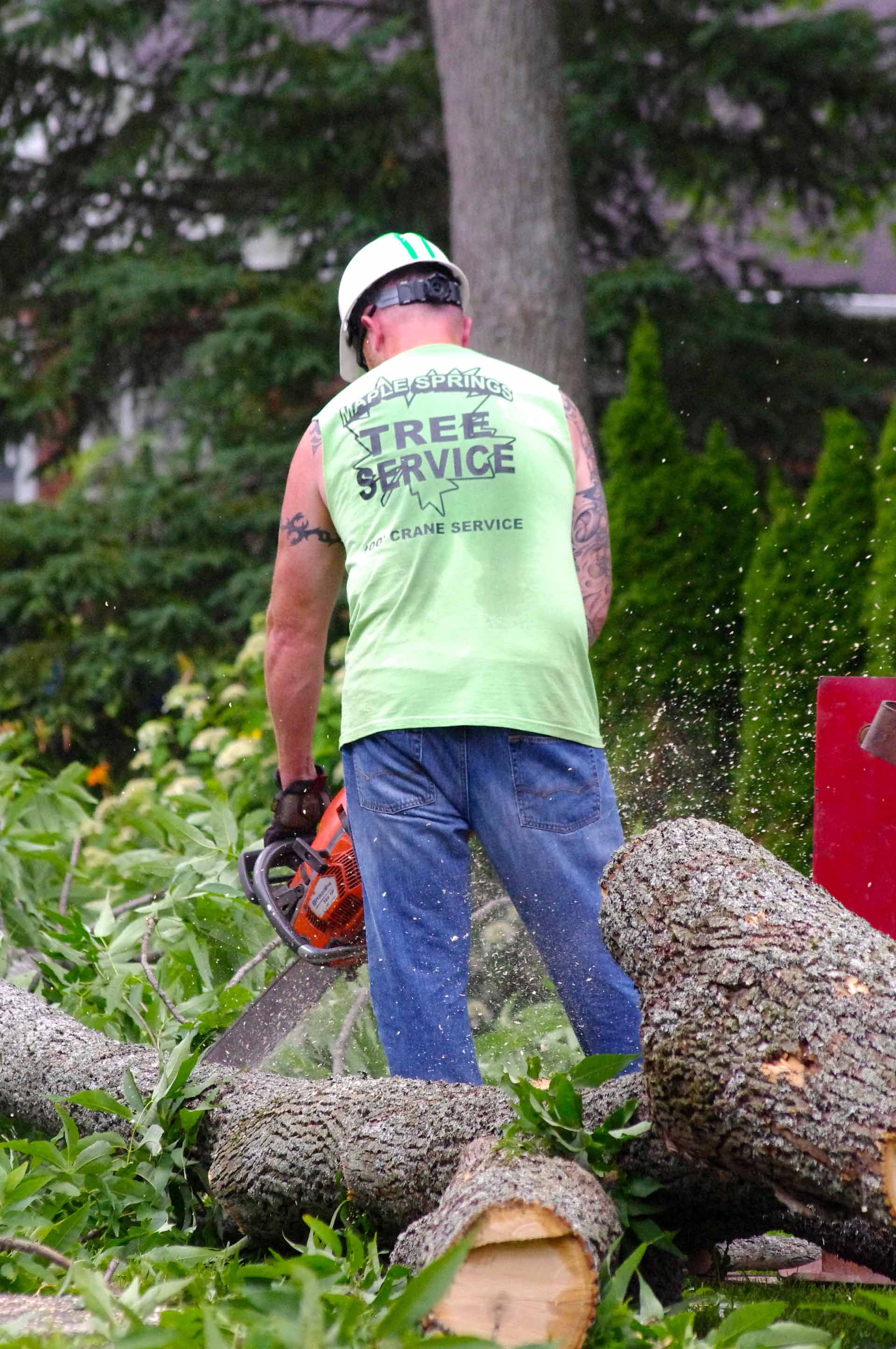 Tree Removal Team Member