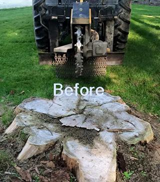 Before Stump Grinding